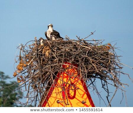 Gniazdo materiały budynku drzewo charakter latać Zdjęcia stock © craig