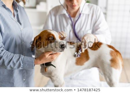 mulher · veterinário · cão · bela · mulher · veterinário - foto stock © kzenon