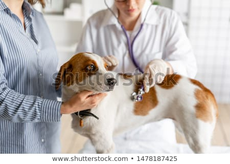 Vet specialist examining sick dog in clinic stock photo © Kzenon