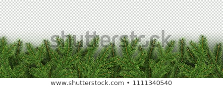 вектора Рождества сосна гирлянда изолированный белый Сток-фото © dashadima
