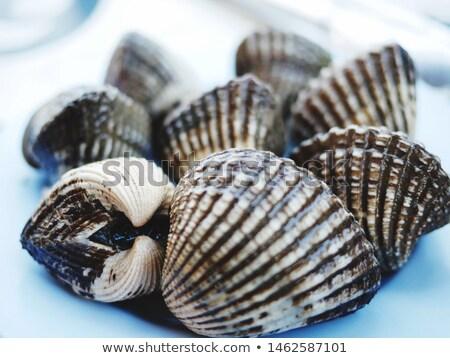 scallops on plate scene Stock photo © bluering