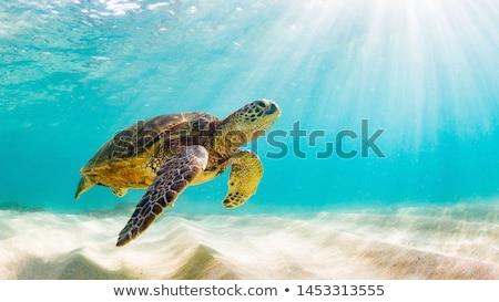 Teknős illusztráció közelkép háttér zöld állatok Stock fotó © colematt