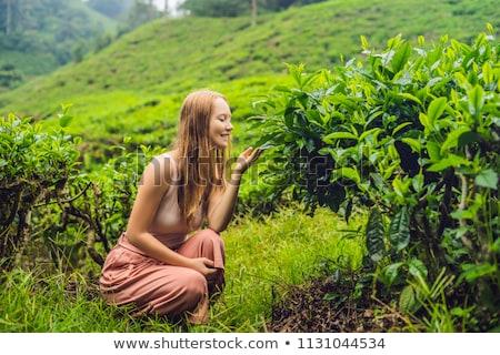 Women tourist at a tea plantation. Natural selected, Fresh tea leaves in tea farm in Cameron Highlan Stock photo © galitskaya