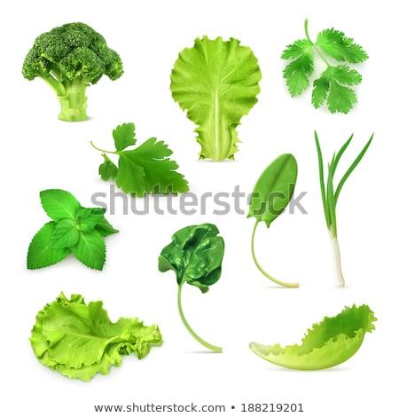 folhas · verdes · planta · crescente · vida · saudável · ambiente · azul - foto stock © jeff_hobrath