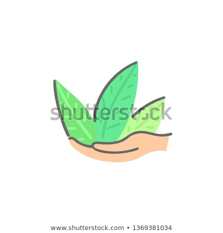Menschlichen Hände halten grünen Anlage abstrakten Stock foto © user_10144511