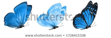 明るい デザイン 白 蝶 パンフレット 着色した ストックフォト © blackmoon979