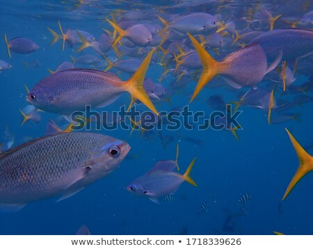 Underwater Seascape with Sea or Ocean Fish Species Stock photo © robuart