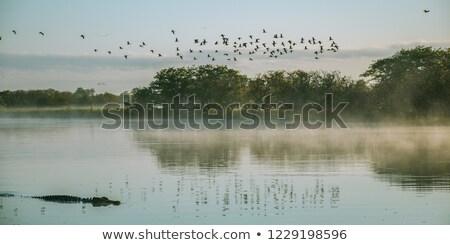 Alligátorok folyó illusztráció víz rajz afrikai Stock fotó © adrenalina