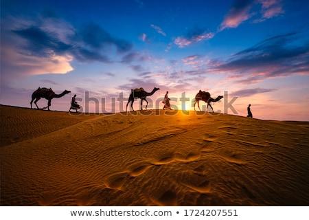 ラクダ · 砂漠 · 2 · ラクダ · 見える · 太陽 - ストックフォト © kash76