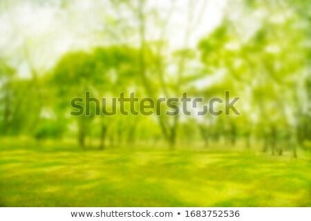 vide · Photos · herbe · verte · papier · film · paysage - photo stock © happydancing