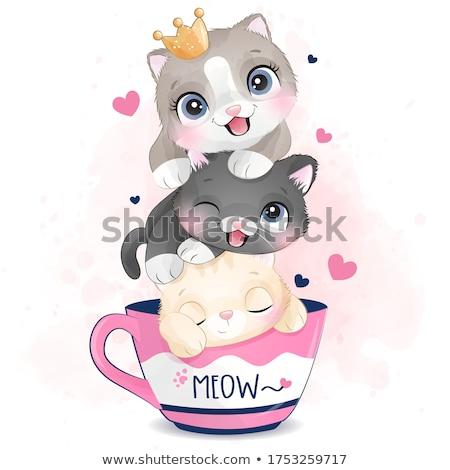 Cute mały kotek studio fotografii potrzebujący Zdjęcia stock © prill