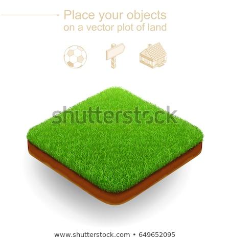 Denso hierba verde aislado blanco verde dibujo Foto stock © LoopAll
