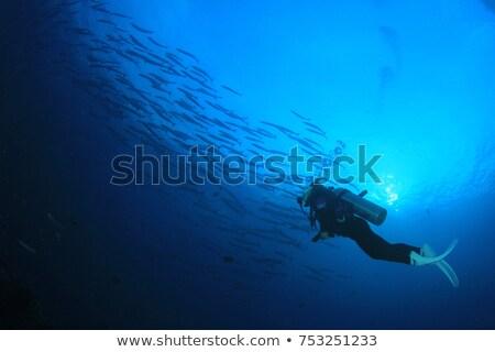 スキューバダイビング 青 水 訓練 海 波 ストックフォト © bbbar