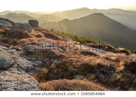 гор · горные · деревне · лес · природы - Сток-фото © Kotenko