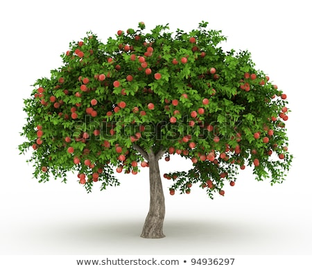 isolated apple tree stock photo © freezingpictures