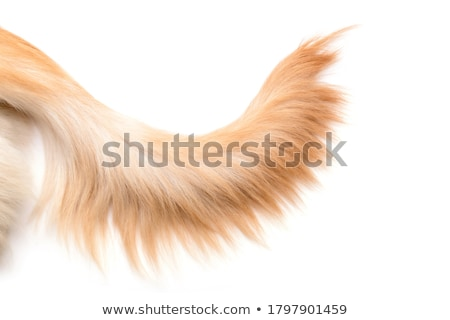 cute colorful doggie paws isolated on white stock photo © lordalea
