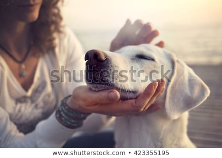 perro · signo · cute · boca - foto stock © willeecole