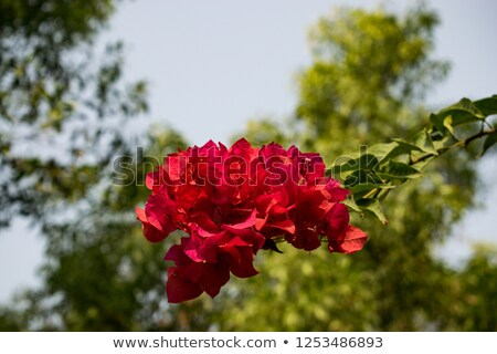 18 fleur jardin couleur rose belle Photo stock © LianeM