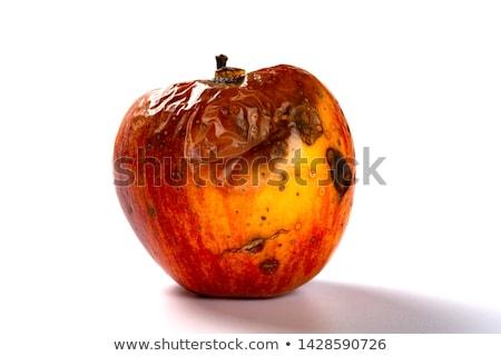 rotten apple Stock photo © jarin13