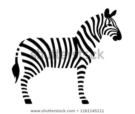 silhouette · zebra · metà · corpo · buio · icone - foto d'archivio © Soleil