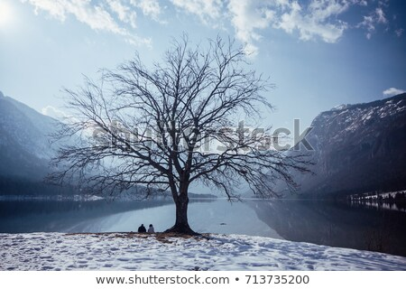 Bohinj lake in winter, Slovenia Stock photo © Fesus