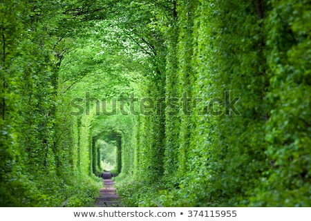 agic Tunnel of Love, green trees and the railroad background Stock photo © Taiga
