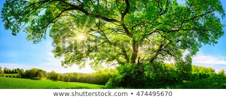 пейзаж · дерево · луговой · зеленая · трава · Blue · Sky · облака - Сток-фото © dmitroza