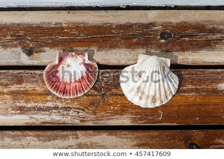 scallop shell lying on terrace stock photo © svetography