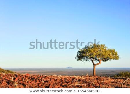 Kék tájkép fák előtér fű természet Stock fotó © markdescande