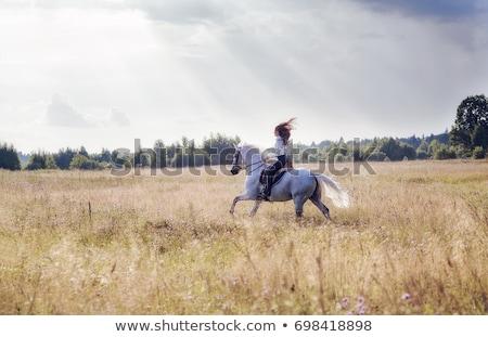 Foto stock: Equitación · caballo · pradera · jóvenes · mujer · bonita