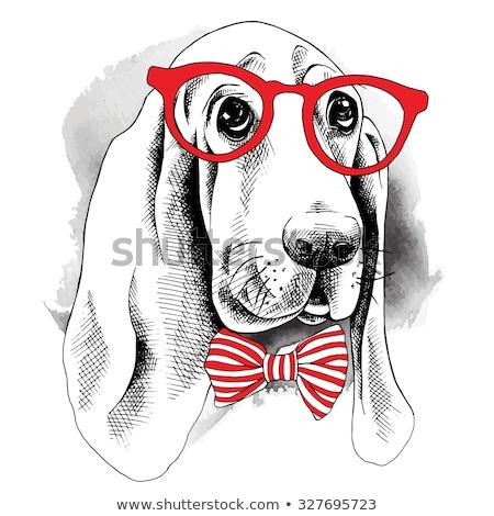 Stok fotoğraf: Basset Hound Puppy Closeup