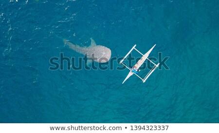 fish boat floats near big whale in blue ocean stock photo © maxmitzu