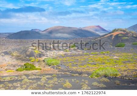 火山 · 畑 · 山 · ワイン · 雪 - ストックフォト © meinzahn