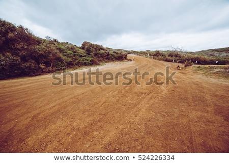 Cena estrada de terra ilustração céu flores Foto stock © bluering