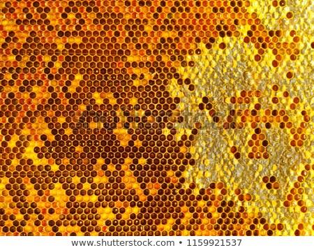 Sweet miel jaune en nid d'abeille cadre fraîches Photo stock © tang90246
