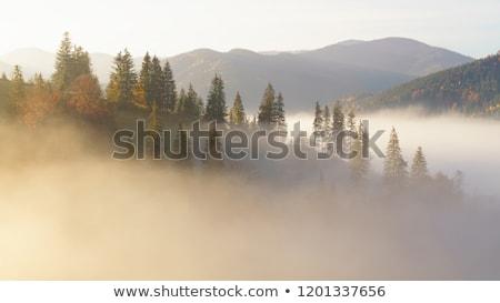Autumn landscape with fir forest on mountain slopes Stock photo © Kotenko