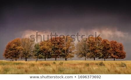 Onweersbui najaar bos gestileerde natuur achtergrond Stockfoto © tracer