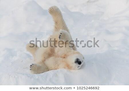 Boldog jegesmedve hát rajz állat Stock fotó © blamb