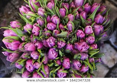 bouquet · rose · tulipes · osier · panier · lumière - photo stock © Lana_M