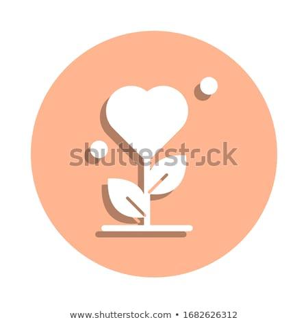 Gratidão vetor ícone isolado branco aniversário Foto stock © smoki