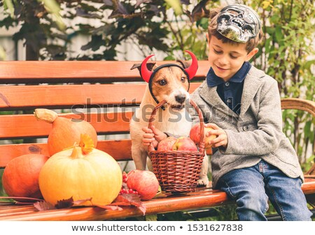 6 happy cute dogs wearing devil horns  Stock photo © feedough