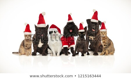 cute team of seven santa pets of different breeds sitting Stock photo © feedough