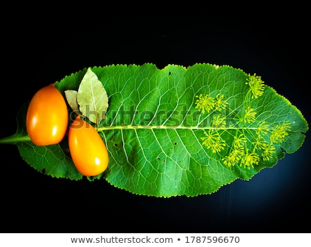 Ogórki konserwowe pomidory liść laurowy butelek zachowane Zdjęcia stock © robuart