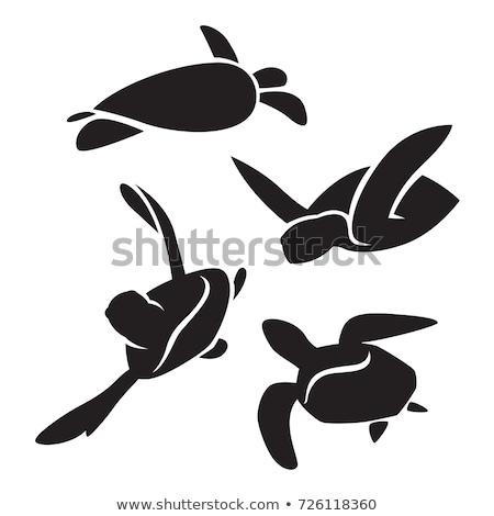 schildpad · egyptische · geïsoleerd · witte · dier · lopen - stockfoto © cookelma