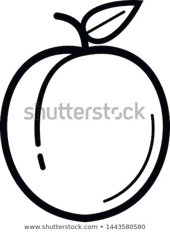 アプリコット アイコン ベクトル シンボル にログイン 食品 ストックフォト © blaskorizov