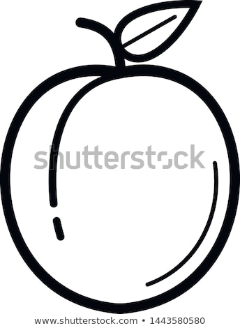 Abricot icône vecteur symbole signe alimentaire Photo stock © blaskorizov