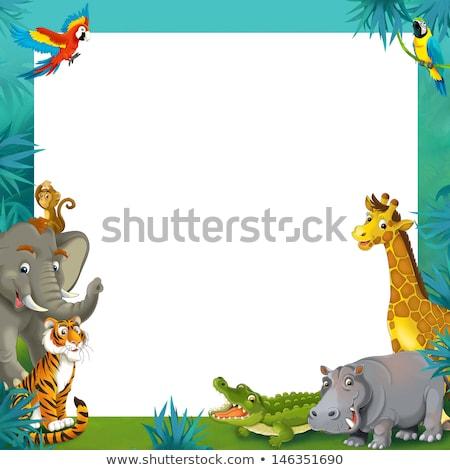 国境 テンプレート 野生動物 幸せそうな顔 実例 自然 ストックフォト © colematt