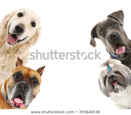 Fofo cão cópia espaço bonitinho animal ilustração Foto stock © lenm