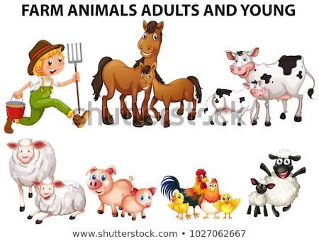 Diferente animais de fazenda adultos homem trabalhar fundo Foto stock © colematt