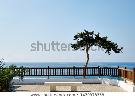 Idyllic scenery lonely tropical tree on Mediterranean sea horizo Stock photo © amok